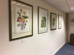 Reinhild's paintings in the meeting room